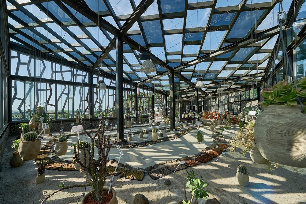 Big cactus greenhouse interior